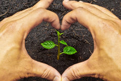 Growing a tree. Two hands forming a heart shape around a young green plant / planting tree stock image