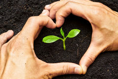 Growing a tree. Two hands forming a heart shape around a young green plant / planting tree stock photography