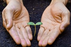 Growing a tree. Two hands holding, caring, and growing a tree royalty free stock images