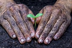 Growing a tree. Two hands holding, caring, and growing a tree stock photo