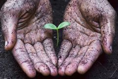 Growing a tree. Two hands holding, caring, and growing a tree royalty free stock photography