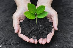 Growing a tree Stock Images