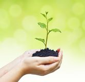 Growing a tree Royalty Free Stock Image
