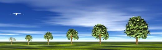 Growing trees Stock Photos