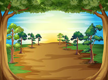 Growing trees at the forest Royalty Free Stock Photography