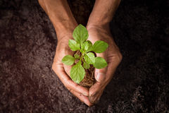 Growing trees with hand on the ground. stock images