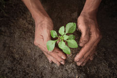 Growing trees. With hands on the ground Stock Photo