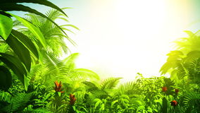 Growing tropical forest, 3d animation stock video footage