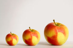 Growing Up. Tree apples. Growing up apple stock images