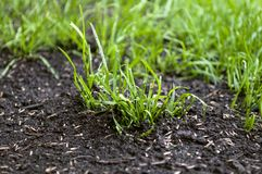Growing up grass seeds. In the ground stock photos
