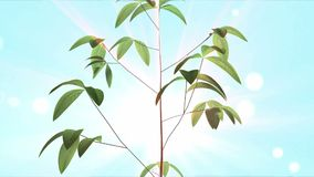 Growing up tree animated stock footage