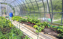 Growing vegetables in greenhouses. Made of transparent polycarbonate Royalty Free Stock Image