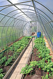 Growing vegetables in greenhouses Royalty Free Stock Images