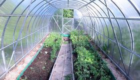 Growing vegetables in greenhouses Stock Image