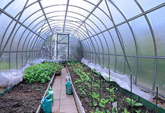Growing vegetables in greenhouses Stock Photos