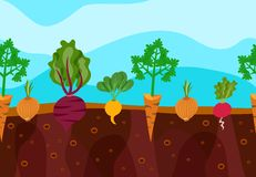 Growing Vegetables Illustration Stock Photos