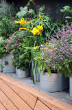 Growing vegetables such as tub plants. In containers and large pots is particularly effective under a roof in a sunny position Royalty Free Stock Photos
