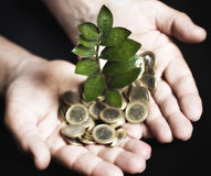 Growing wealth. Green plant growing out of pile of Euro coins held in open hands with black background symbolizing financial prosperity royalty free stock photo