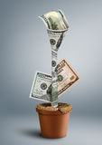 Growing wealth creative concept, money as flower in pot Royalty Free Stock Photo