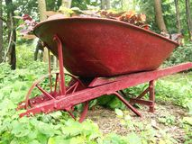 Growing Wheel Barrow. Red Wheel Barrow sitting in the forest Stock Images