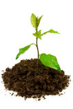 Growing young green plant. Stock Photo