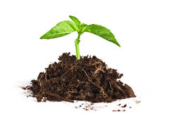 Growing young plant Stock Photos
