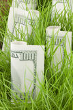Growing your investment. One Hundred Dollar Bills intermixed with Grass in a Pot Royalty Free Stock Photography