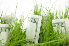 Growing your investment. One Hundred Dollar Bills intermixed with Grass in a Pot Royalty Free Stock Images