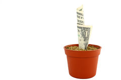 Growing Your Money. A small flower pot with a dollar bill that seems to be growing into a money tree. This is one plant that could be a real investment Royalty Free Stock Images
