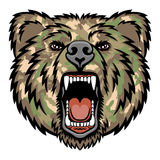 Growling bear Royalty Free Stock Images