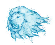 Growling lion water splash Stock Photos