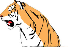 Growling tiger. The part of drawing growling tiger Stock Image