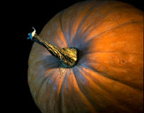 Ripe pumpkin. Grown a pumpkin lies on the side of isolated black background Stock Image