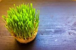 Grown seeds grass Stock Photo