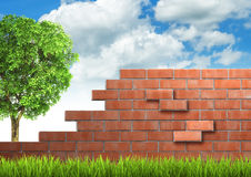 Grown tree with brick wall on green fresh grass. Stock Image