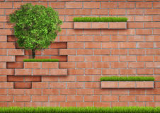 Grown tree with brick wall on green fresh grass. Stock Images
