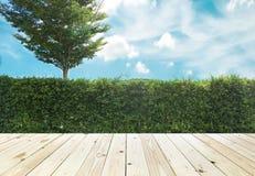 Grown tree wall and ornamental shrub Royalty Free Stock Image