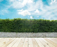 Grown tree wall and ornamental shrub Royalty Free Stock Photos