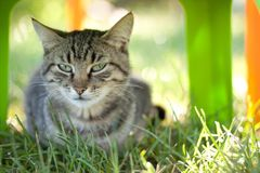 Skeptical cat. Grown up cat is looking skeptical because she aren`t sure that she`s good at photo Stock Photography