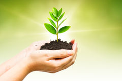Growng树 免版税图库摄影