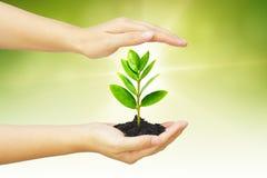 Growng träd Royaltyfria Foton