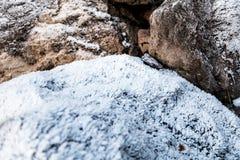 growning的弗罗斯特在岩石 免版税库存图片