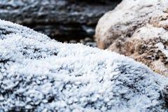 growning的弗罗斯特在岩石 库存图片
