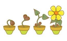 Growt y desarrollo ilustración del vector