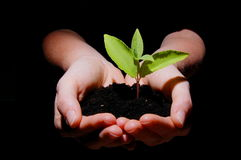 Growth. Young plant in hand showing concept of youth and growth Royalty Free Stock Photos
