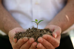 Growth. To protect the living world is the duty of every person Royalty Free Stock Image