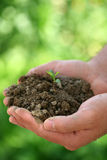 Growth Stock Image