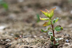 Growth Stock Photos