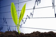 Growth. Finance or business growth concept with young plant Stock Photography
