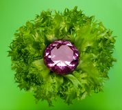 Growth. Growing the precious wealth - pink big diamond in the fresh leaves Royalty Free Stock Photo